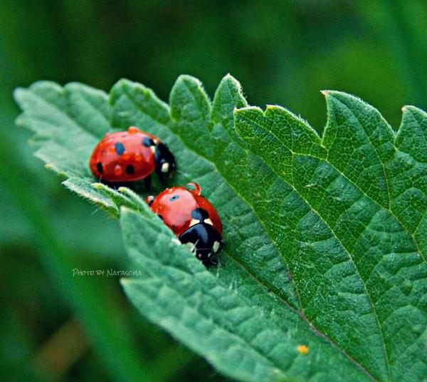 Ladybug Adventures by Nataschaa
