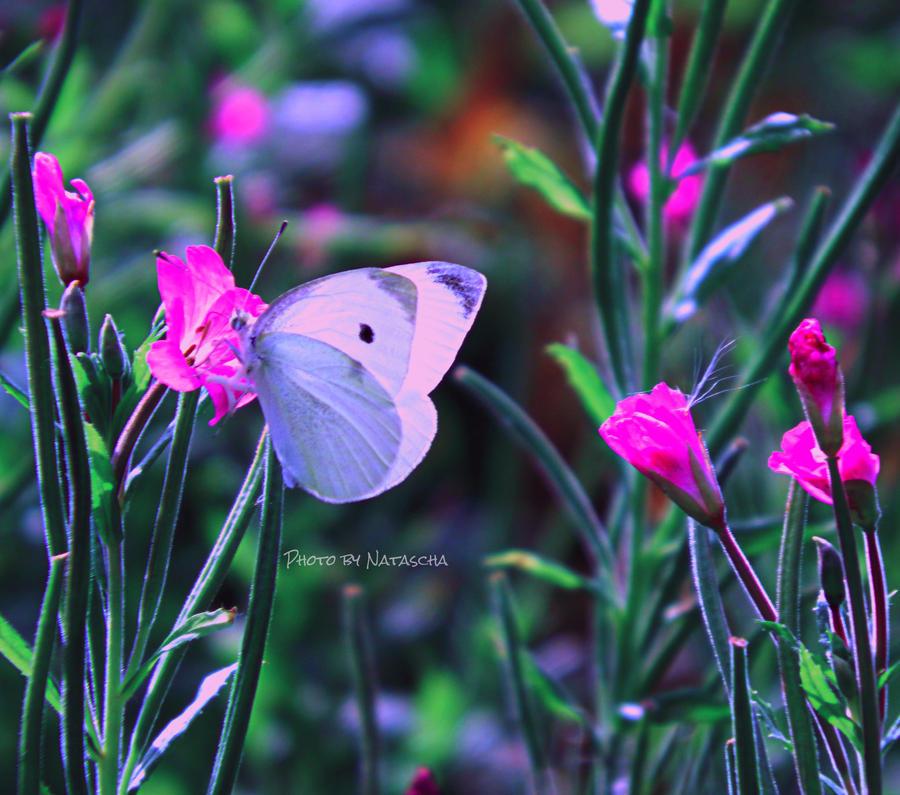 My secret garden by Nataschaa