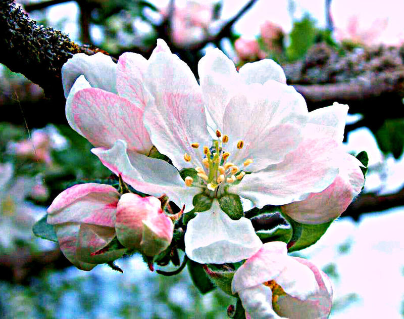 Blossom by Nataschaa