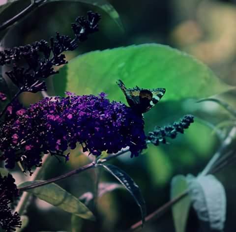 Last Summer Days by Nataschaa
