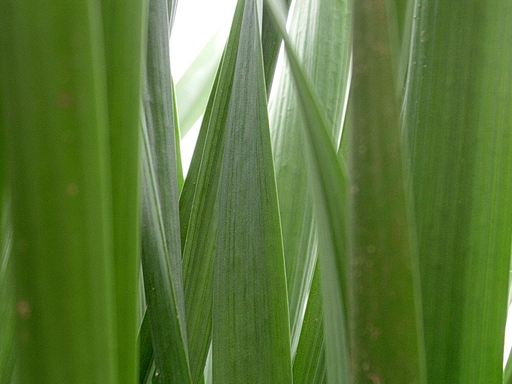 grass by dest-stock