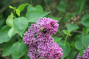 Bee on Flowers #1