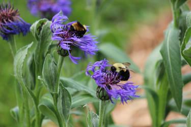 Bee on Flowers #2