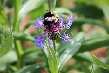 Bee on Flowers #3
