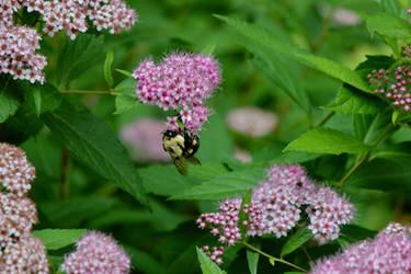 Bee on Flowers #4