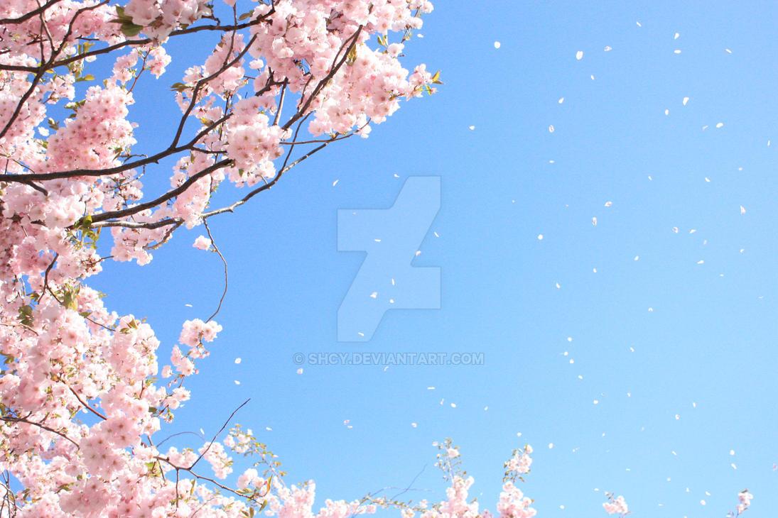 Сакура с сиками 4 фотография
