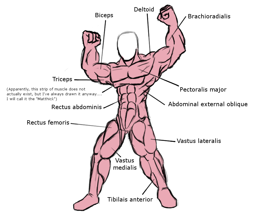 Human muscle diagrams defenderautofo human muscle diagram by neojimheadshot on deviantart muscles ccuart Image collections