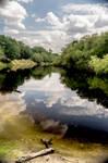 Reflections On The Myakka River