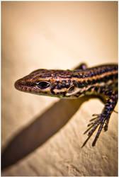 Lizard - Macro