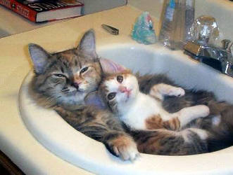 kitty cats by vampfreak17