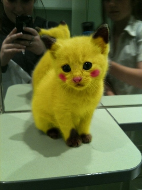 Pikachu Kitty by vampfreak17