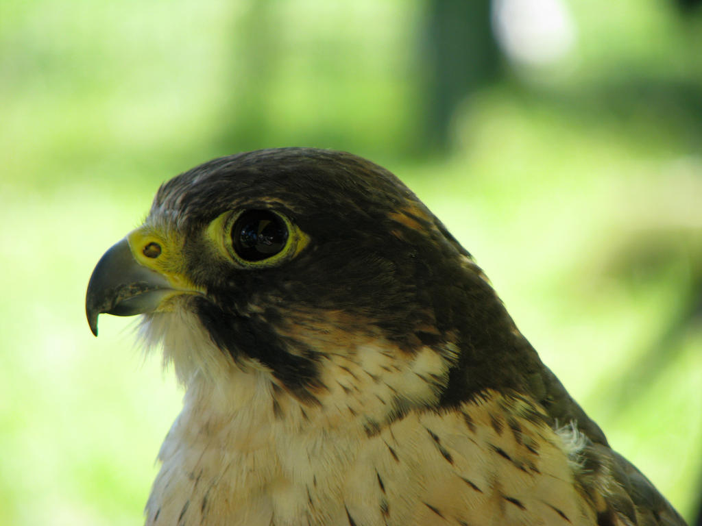 Hawk Eye Nature Camera Review