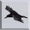 Raven Icon by Topaz172