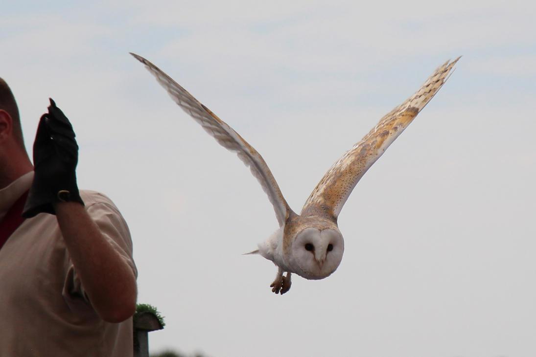 Snowy Owl (1) by Topaz172