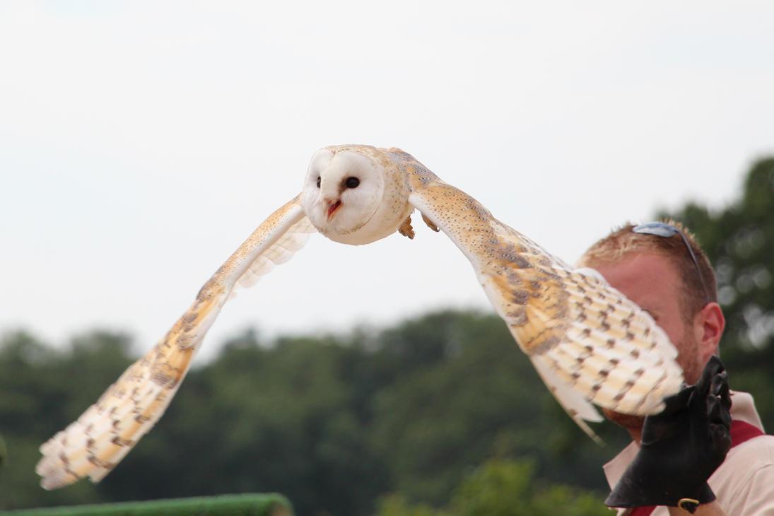Snowy Owl (2) by Topaz172