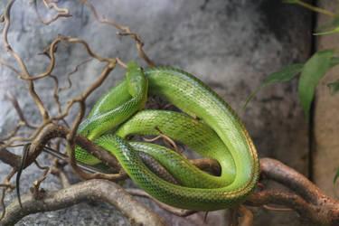 Green Snake by Topaz172