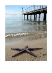 starfish jetty by kayne