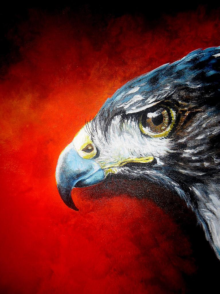 Hawk by casia85