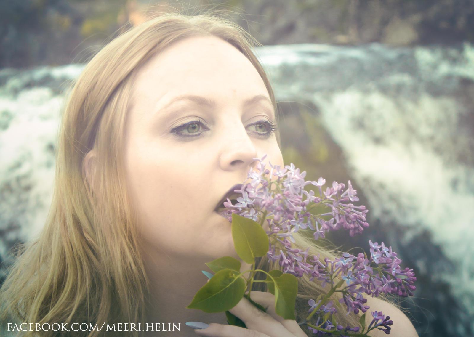 Lilac III by MeeriHelin