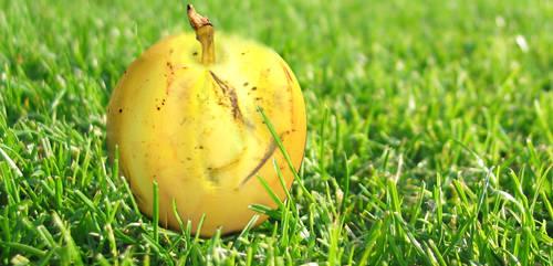 Banana Apple by abjam77