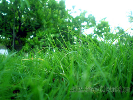 Vista Natural Lawn at Khairpur