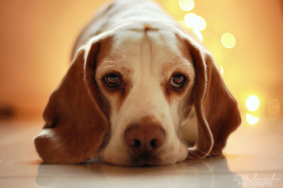 Poor doggy by Rozowynos