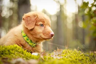 Little lost puppy by Rozowynos