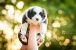 Puppyset by Rozowynos