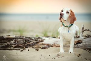 On the beach by Rozowynos