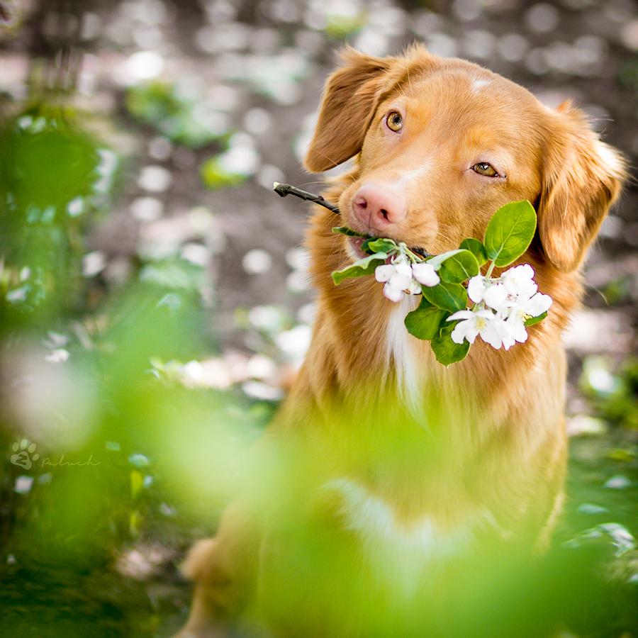 Spring is cute by Rozowynos