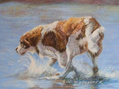 Saint Bernard dog by suedeutscher