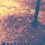 redscale winter