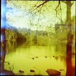lake, leaks and duckies