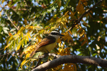 Autumn Bird by Kiredit