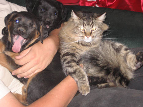 Two Puppies And A Cat