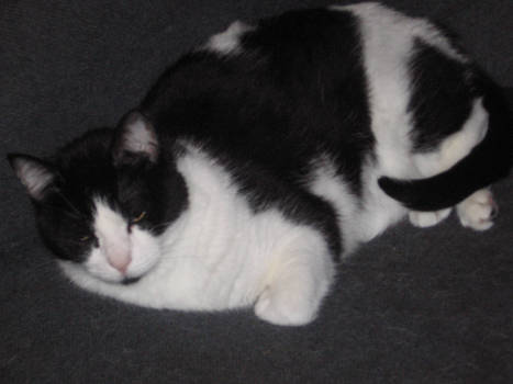 Da Cat A Lazy