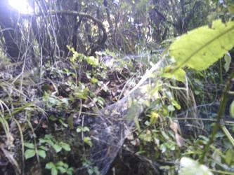 Spider Web by veoymuestro