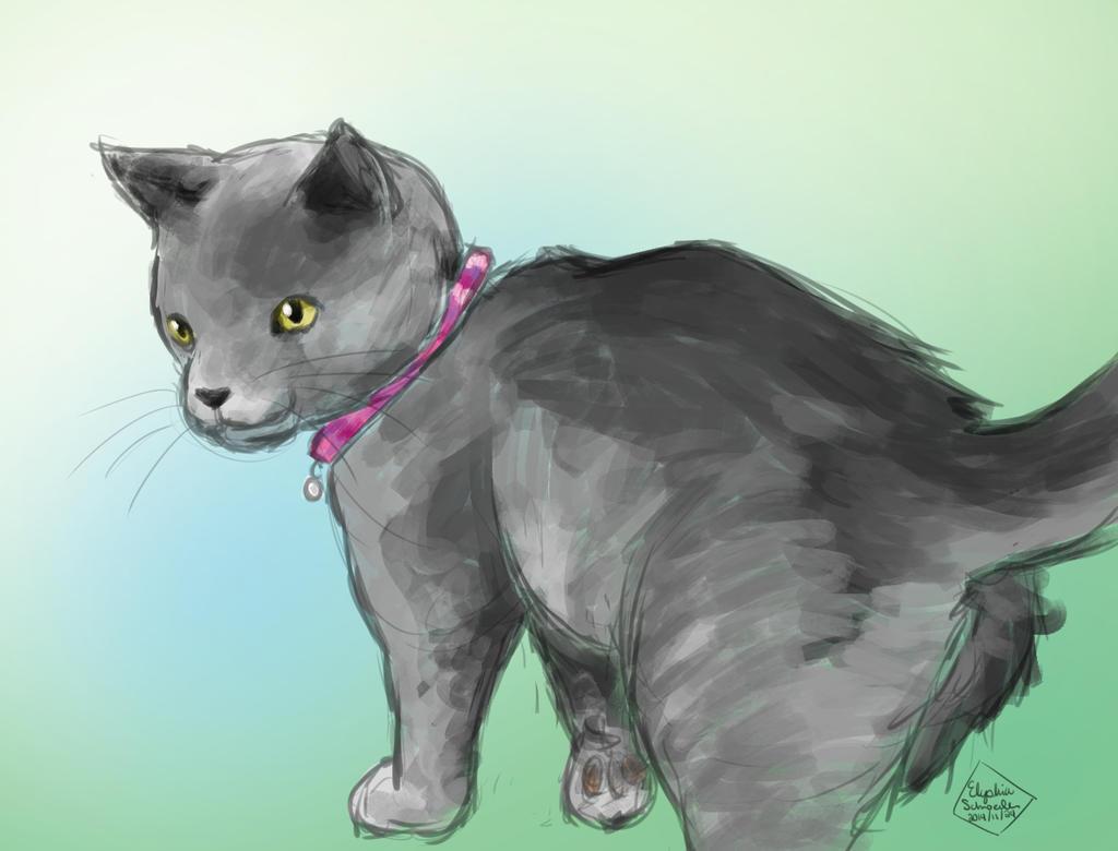 kitten nova by icekitsune13darkfire