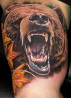 Bear by chadchase