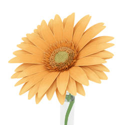 Single Gerber Daisy by Gilventure
