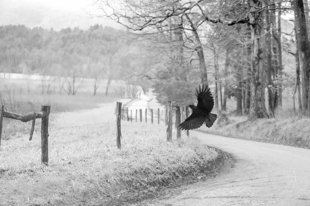 Flight by twillit