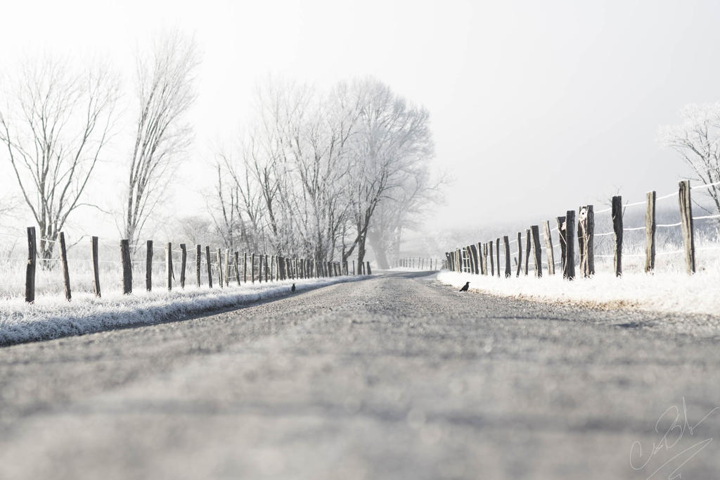 fog and frost by twillit
