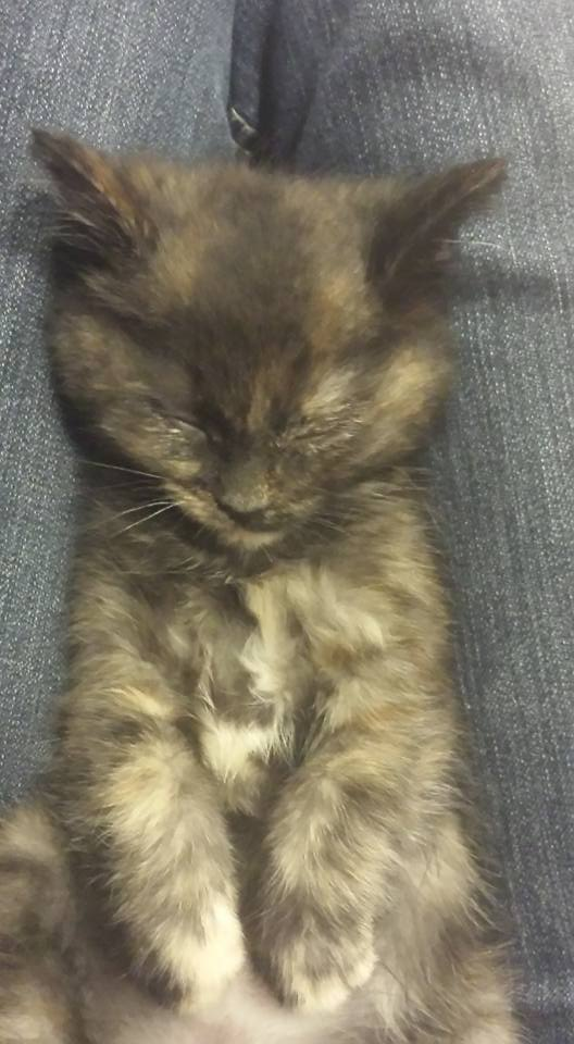 There's a Sleeping Kitteh on my Lap! by BalletGal15
