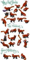 Tatty's Red Panda Hexie