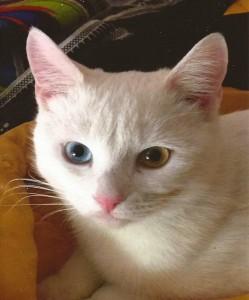 thatguy4802's Profile Picture