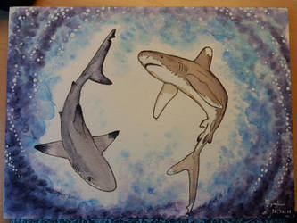 Carcharhinus melanopterus, Carcharhinus longimanus by Guyveluwii