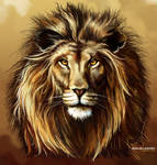 Lion (test task)