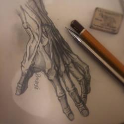 Anatomical hand drawing by KhajiitSawyer