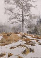 Polttopuu by KorsonOraakkeli