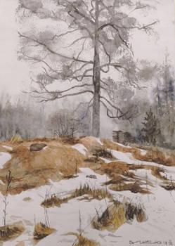 Polttopuu